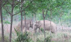 ช้างป่า5ตัว