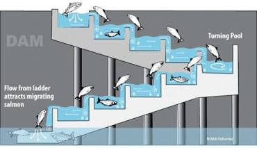 Fish passage_n